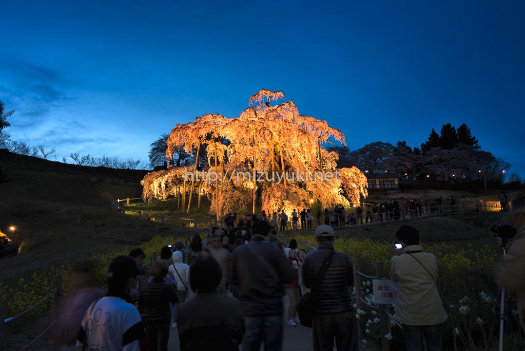 滝桜・ライトアップ